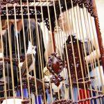 Bài 6. Chăm sóc, sưởi ấm chim mùa đông