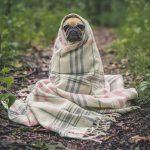 10 loại cây phổ biến có độc cho chó