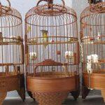 Những tiêu chí để đánh giá lồng chim khuyên đẹp