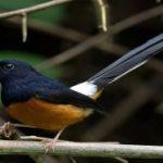 Danh sách những loài chim cảnh dễ nuôi tại Việt Nam