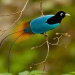 Top 15 loài chim đẹp nhất thế giới