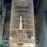 Các loại lồng chim Họa Mi