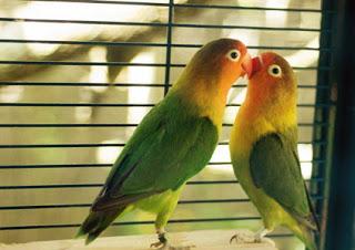 Kinh nghiệp chọn nuôi chim cảnh