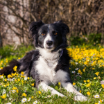 Những giống chó ngoan ngoãn nhất là gì?