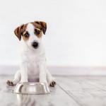5 lời khuyên để giúp huấn luyện chó con