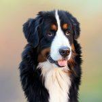 Mối quan tâm về sức khỏe thường gặp ở chó con