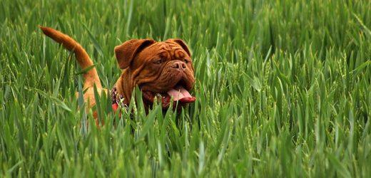 Lời khuyên cho những người nuôi chó lần đầu
