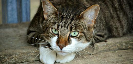 Mèo & Nháy mắt chậm: Có nghĩa là gì?