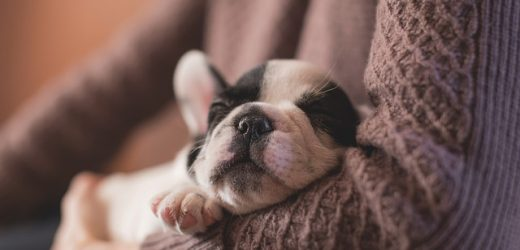 Nuôi một con chó con: Những gì bạn cần biết