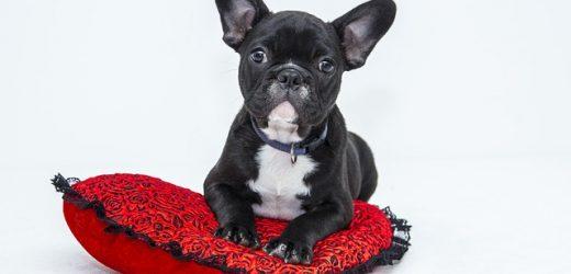 Dòng thời gian của chó con: Làm thế nào để chó con lớn lên thành chó