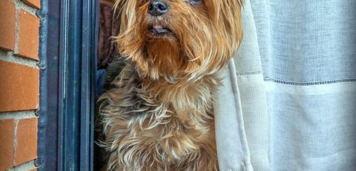 Hành vi của con chó con của tôi có nghĩa là gì?