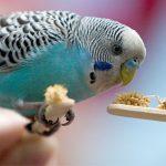 Li dị chỉ vì… chim!