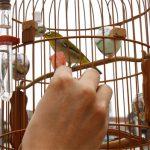 Khi chồng mê chơi chim cảnh, truyện tranh