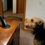 Con chó cô đơn hát cho mẹ trên loa ngoài trong video cảm động