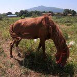 Con ngựa ăn cỏ trên đồng