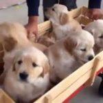 Cuối tuần dẫn gia đình cún đi dạo phố