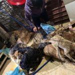 Triệu tập 30 đối tượng trong đường dây trộm hàng trăm tấn chó