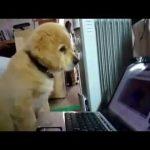 Những chú chó cực đáng yêu
