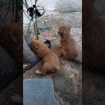 [Video Dog] 2 con chó con cực dễ thương luôn