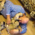 Video những chú cún con cực dệ thương yêu quá