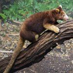 Những loài vật bạn chưa kịp biết tới đã sắp tuyệt chủng