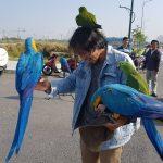 Chơi và nuôi chim vẹt
