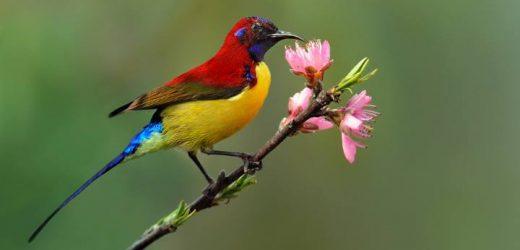 công thức là thức ăn cho chim hút mật