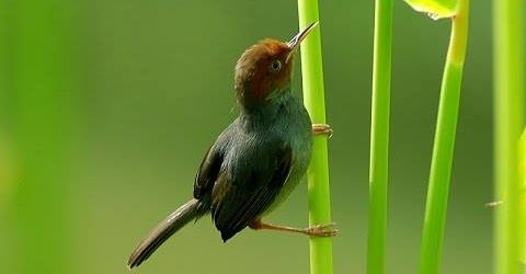 Tổng hợp kiến thức về chim sâu