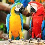 Các vấn đề dinh dưỡng cần chú ý trong thức ăn của vẹt