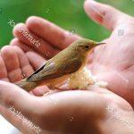 Những loại bệnh ở Chim thường gặp và cách điều trị