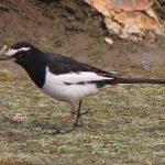 20 các loài chim cảnh nhỏ thường nuôi trong nhà ở Việt Nam