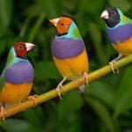 Những vấn đề cần lưu tâm khi nuôi chim cảnh tại nhà