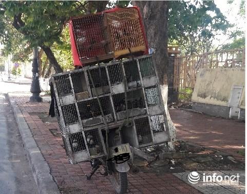 Lạ lùng chuyện mua chim trên cây ở Quảng Bình - Ảnh 2.