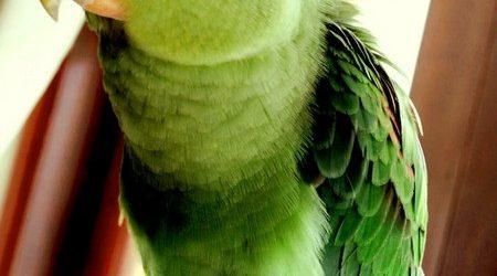 Cách chăm sóc chim cảnh khi có vết thương ngoài da